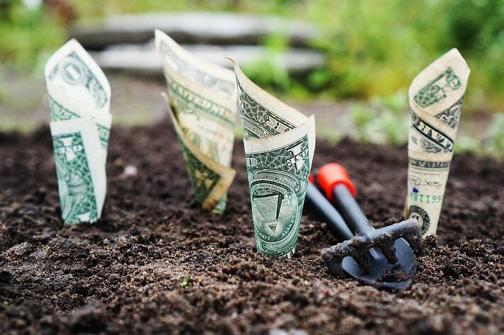 A Great Landscape Company That Is Cheap In RI | Worry No Mow Yard Service